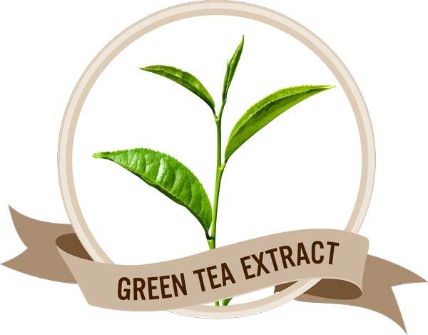 Thành phần trà xanh trong rene slim
